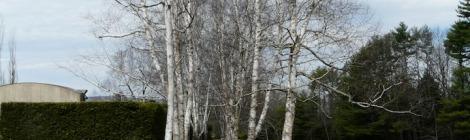 Climate Change and Landscape Preservation | Robert Melnick